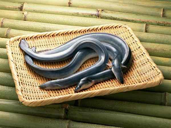 Mơ thấy con lươn